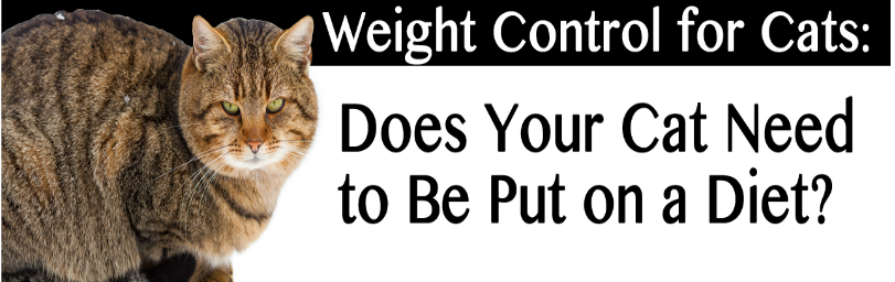 Weight Control for Cats:  Does Your Cat Need to Be Put on a Diet?