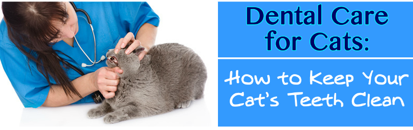 The Truth About Idaho Falls Cat Teeth Care – 4 Myths Explained!