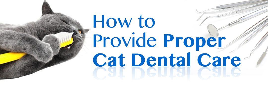 How to Provide Proper Cat Dental Care?
