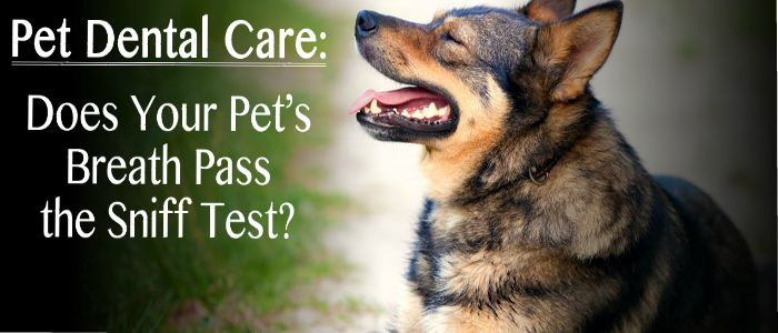 Pet Dental Care:  Does Your Pet's Breath Pass the Sniff Test?