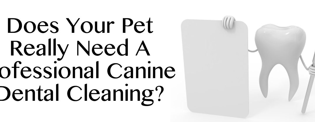 Does Your Pet Really Need A Professional Canine Dental Cleaning In Idaho Falls?