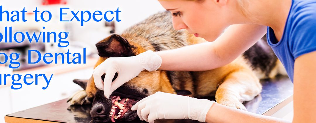 What to Expect Following Dog Dental Surgery in Idaho Falls