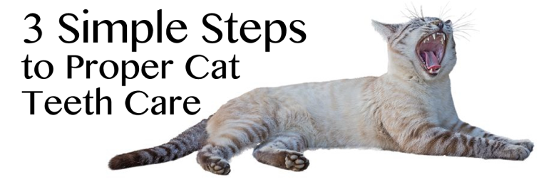 3 Simple Steps to Proper Cat Teeth Care
