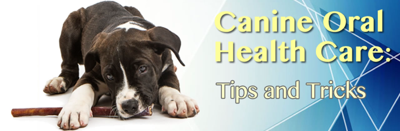 Canine Oral Health Care in Idaho Falls:  Tips and Tricks