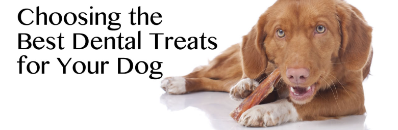Choosing the Best Dental Treats for Your Dog