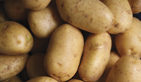veterinarian idaho falls mashed potatoes