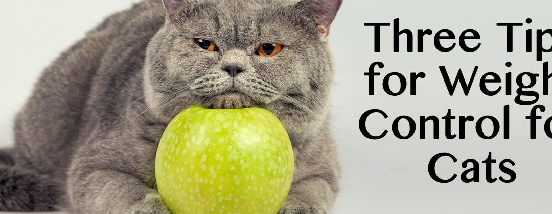 Three Tips for Weight Control for Cats in Idaho Falls