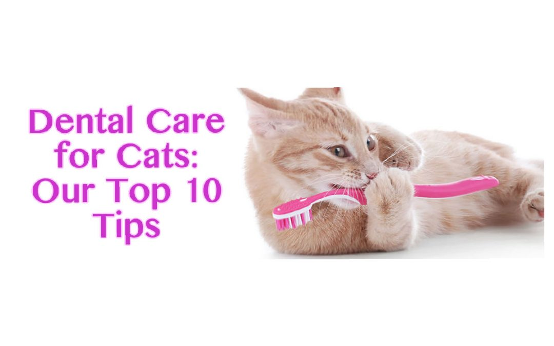 Dental Care for Cats: Our Top 10 Tips
