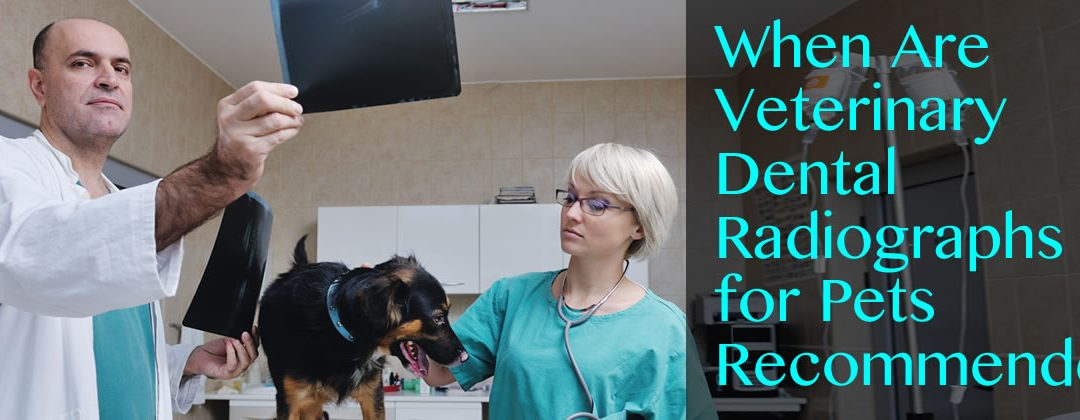 When Are Veterinary Dental Radiographs for Pets Recommended?