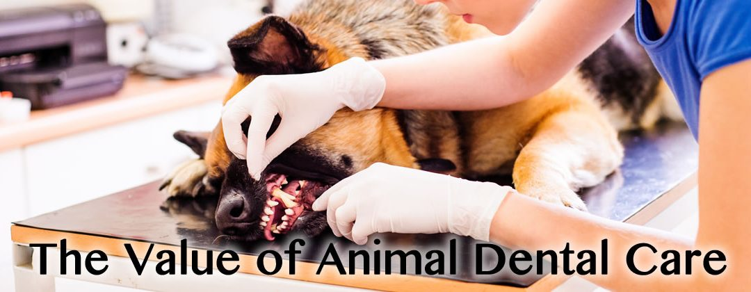 The Value of Animal Dental Care